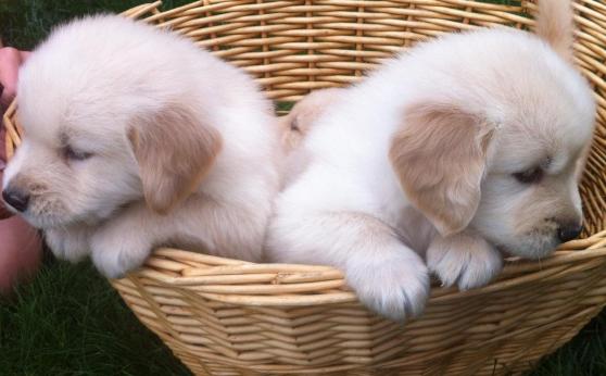 rencontre chiot et chien adulte rencontre coquines gratuites