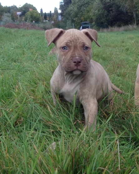 A Vendre Red Nose Gros Gabarit ANIMAUX CHIENS à