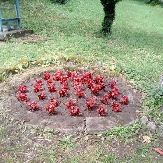 Annonce occasion, vente ou achat 'Jardinier autoentrepreneur'
