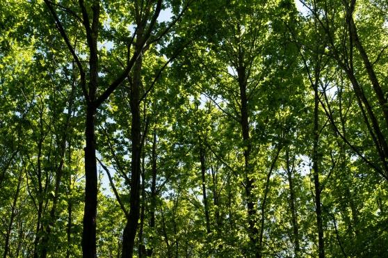 Recherche parcelle de Bois près Poitiers