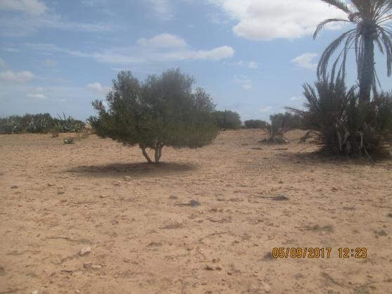 Terrain 700 m2 mahboubine jerba tunisie
