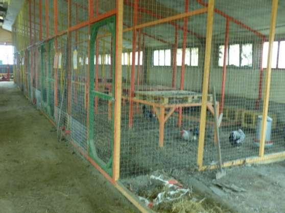 Recherchez vente ou occasion animaux annonce gratuite for Race poule d ornement