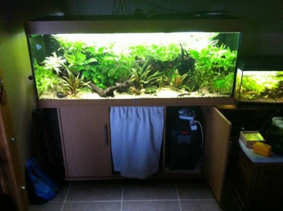 Recherchez vente ou occasion animaux annonce gratuite for Vente aquarium complet
