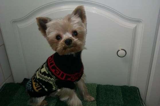 cherche garde pour mon petit chien maizi res l s metz animaux chiens maizi res l s metz. Black Bedroom Furniture Sets. Home Design Ideas