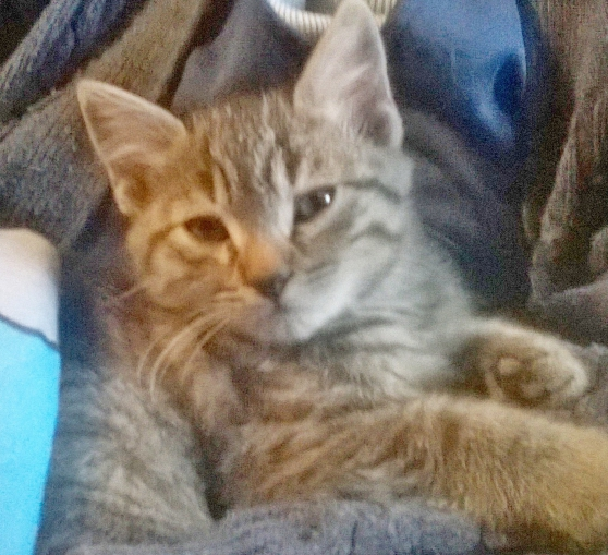 Annonce occasion, vente ou achat 'donne chatons'