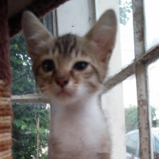 Annonce occasion, vente ou achat 'chatons tigrés male à donner'