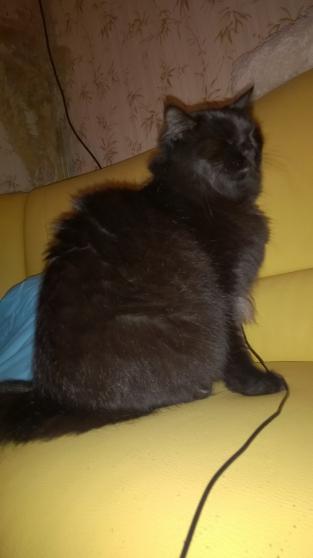 gratuit toute la chatte noire Rose chatte sexe pics