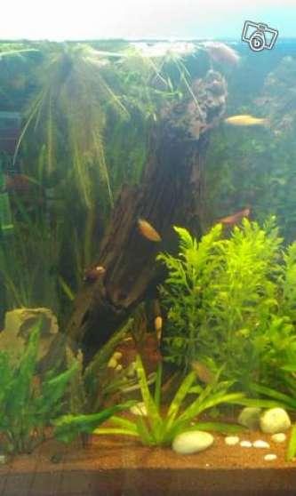 Vends Boulettes engrais aquarium - Photo 2