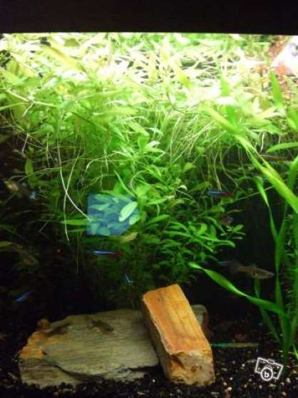 Vends Boulettes engrais aquarium - Photo 3
