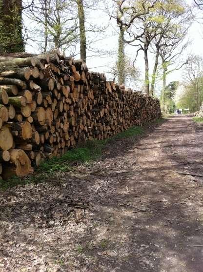 Bois de chauffages domont jardin nature bois domont for Le jardin domont