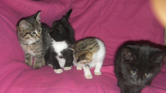 Annonce occasion, vente ou achat 'adorables chatons'