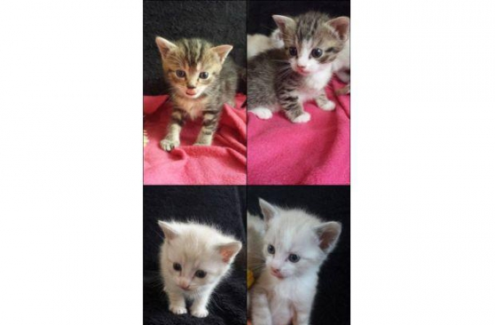 Donne adorables chatons