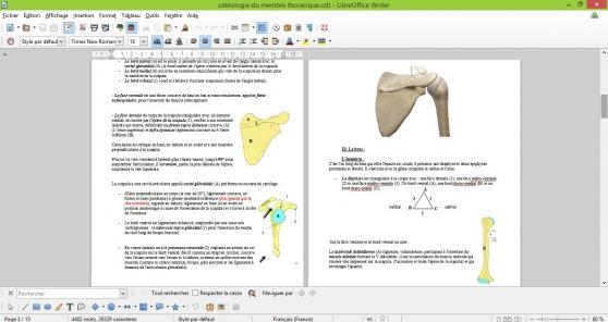 cours d\'anatomie PACES Rangueil - Photo 2