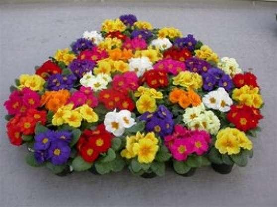 fleurs de printemps - Annonce gratuite marche.fr
