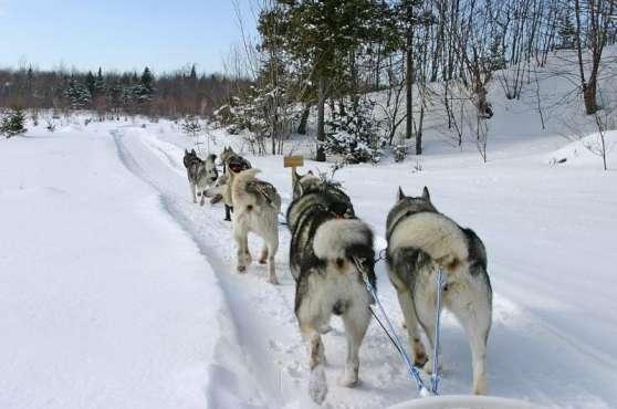 Découvrez la magie de l\'hiver au Québec - Photo 2