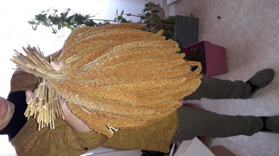 grappes de millet rouge - Photo 4