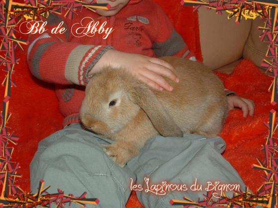 bébés lapins nains pure race