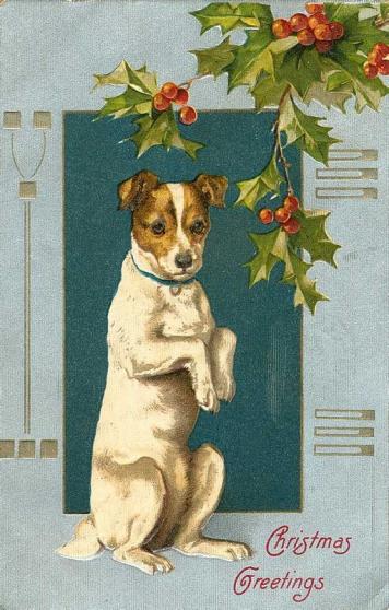 garde petit chien gentil - Annonce gratuite marche.fr