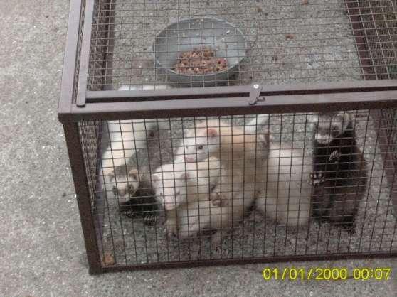 cage furet