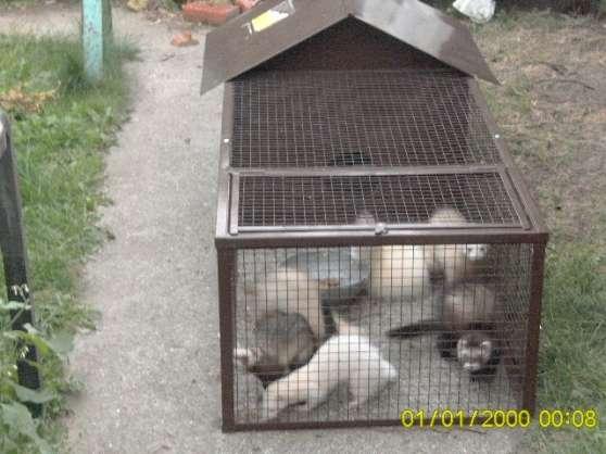 cage furet - Photo 2