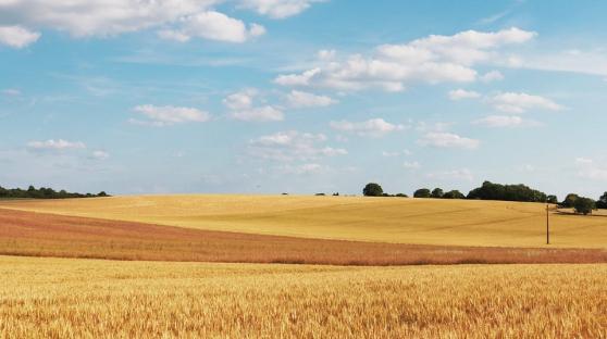 Domaine agricole céréalier Vienne à 45mi