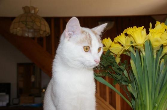 Mallow chat mâle