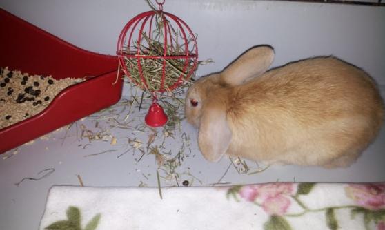 Garde b b lapin herblay animaux lapins herblay - Code postal herblay ...