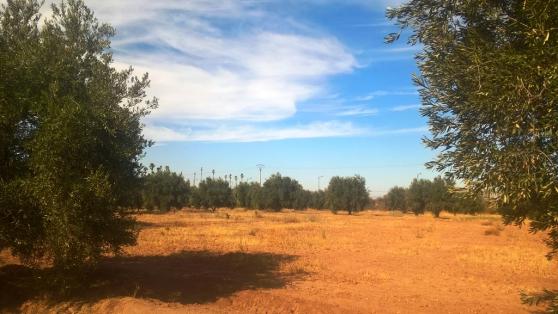 ferme titrée 4 ha à targa marrakech - Photo 3
