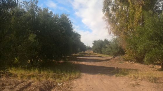 ferme titrée 4 ha à targa marrakech - Photo 4