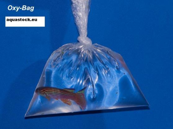 25 breathing bags OXYBAG 8cmx30cm