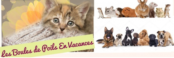 Annonce occasion, vente ou achat 'garde animaux'