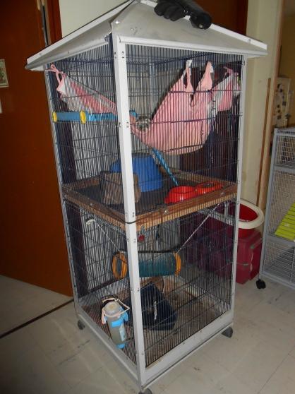 Annonce occasion, vente ou achat 'cage'