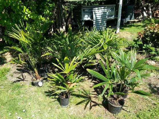 palmier ornemental pour tortue - Annonce gratuite marche.fr