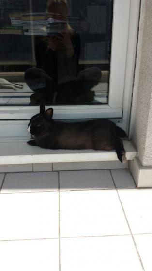 recherche un accueillant pour lapin nain - Annonce gratuite marche.fr