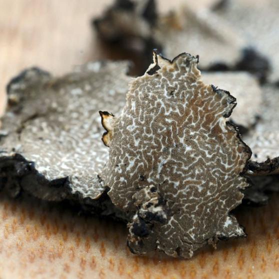 Pelures de truffes du Périgord Surgelé