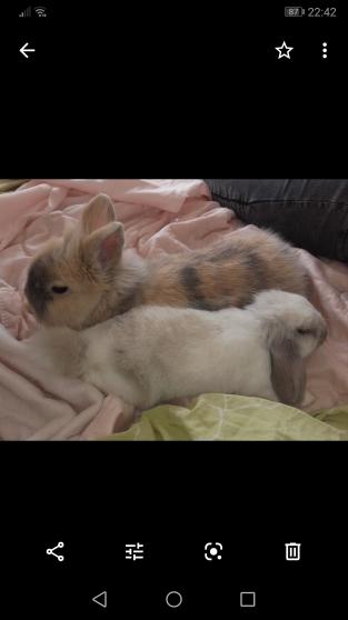 Don de lapins