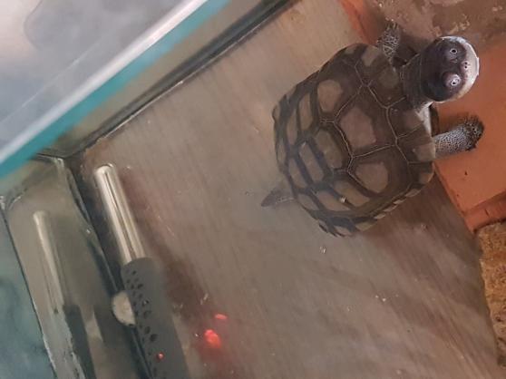 Annonce occasion, vente ou achat 'tortues léopard et tortue Pélomédusa'