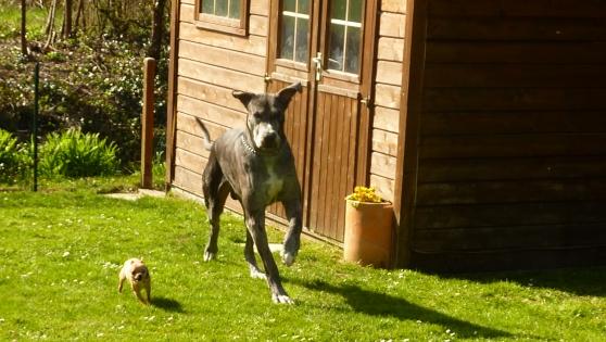 Petite Annonce : Recherche famille pour garde de chien - En vue de futurs vacances ou déplacements... Nous recherchons des