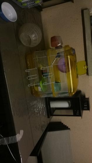 Cage rongeur (hamster, rat, souris,..)