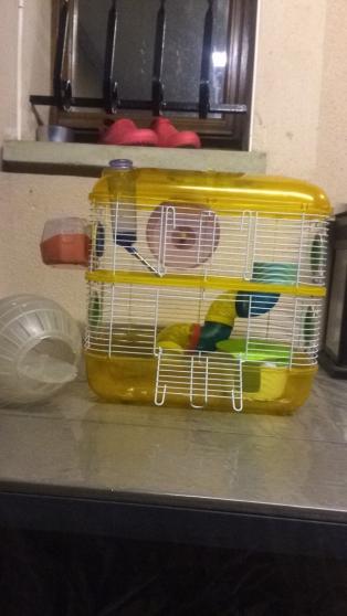 Cage rongeur (hamster, rat, souris,..) - Photo 2