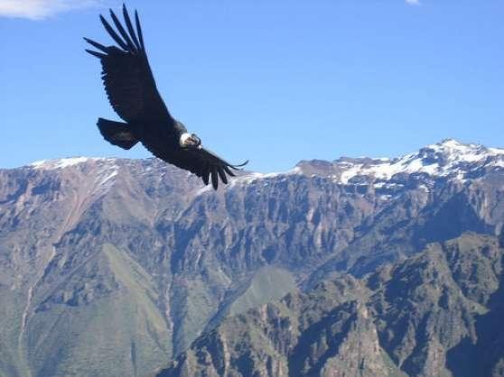 Agence de Voyages au Pérou