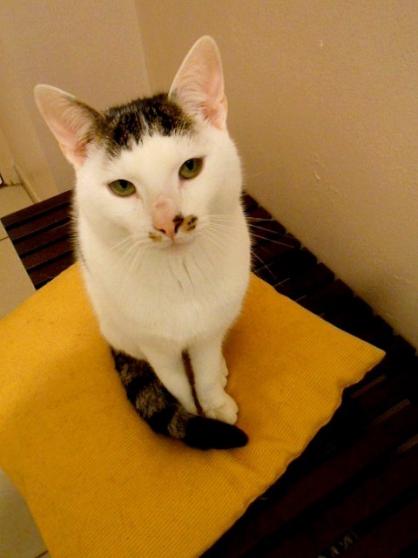 donne chat contre bon soins arras animaux dons de chats arras reference ani don don. Black Bedroom Furniture Sets. Home Design Ideas