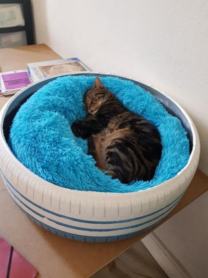 Annonce occasion, vente ou achat 'Garde chien / chat'