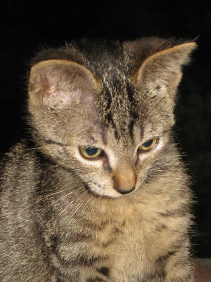 Annonce occasion, vente ou achat 'Donne chatons contre bons soins'