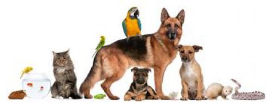 Annonce occasion, vente ou achat 'Je garde vos animaux'