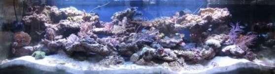 Annonce occasion, vente ou achat 'Aquarium Récifal Haut de Gamme complet 1'