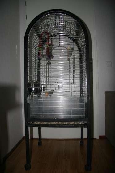 Cages Perroquets Gris du Gabon...