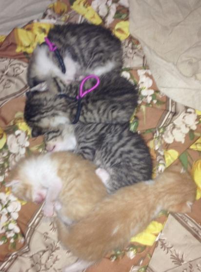 Annonce occasion, vente ou achat 'Donne adorables chatons'