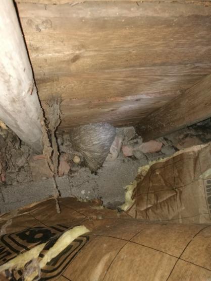destruction nid de guêpe et frelon - Photo 3