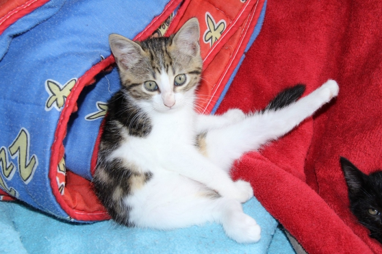 Chatons - Marche.fr